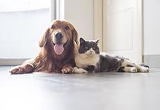 Seguro Pets